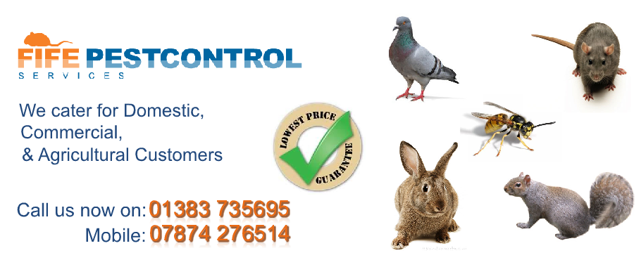 Chicken Farm Pest Control Fife