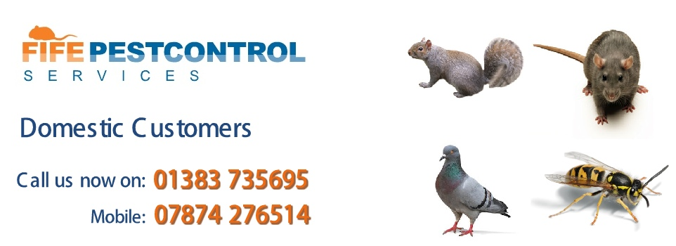 Fife Pest Control Rat Removal Specialists