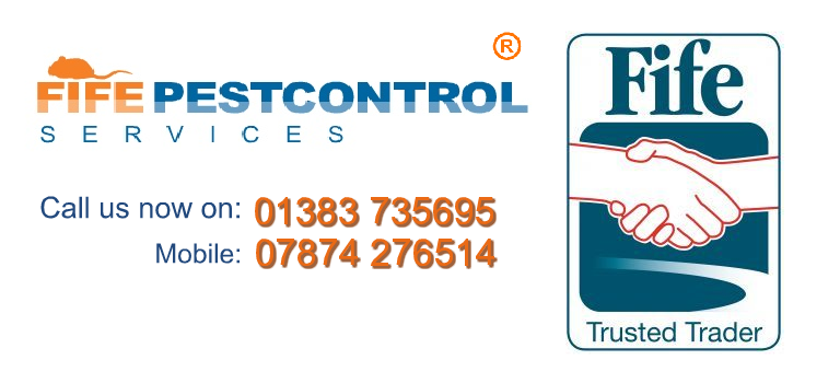 Fife Council Pest Control Trusted Traders - Fife Pest Control Services